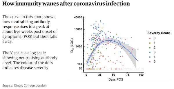 How immunity to COVID wanes